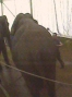 Brutal past catches up with elephant trainer