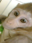 Monkeys BORN TO SUFFER at major research facility.