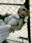 Oppose Florida lab monkey farm