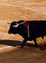 Help end bullfighting in Colombia!