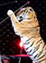 America's largest animal circus closes after 146 years!