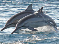 Groups call on WAZA to expel members that support dolphin drive hunts
