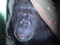 Animal Defenders International : Animals in entertainment